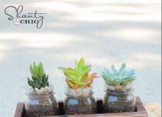 Regalos para profesores plantas