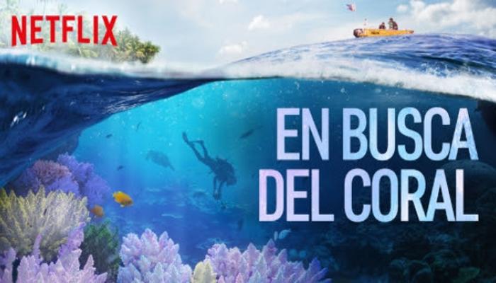 medioambiente en busca del coral